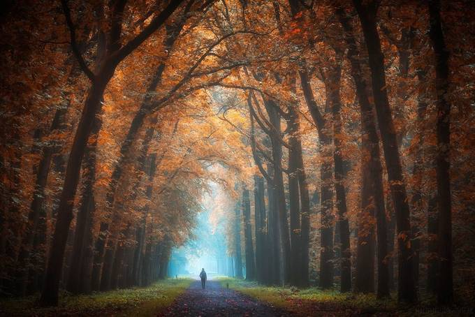 Autumn feelings by MalefijtFotografie - Image Of The Month Photo Contest Vol 27