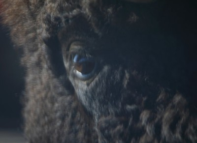 Eye Of The Buffalo
