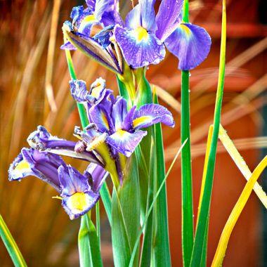 Lovely flowers.
