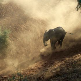"Me (14) and my Dad were travelling through the Kruger-Nationalpark in South Africa when a group of elephants  were ""climbing"" a hill do..."