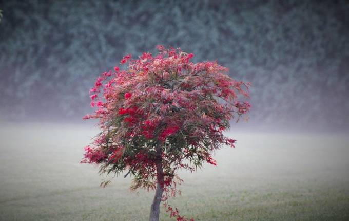LITTLE TREE IN MORNING FOG by beckyreding - Image Of The Month Photo Contest Vol 27