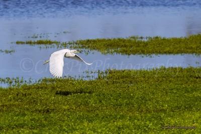 Marsh Flight