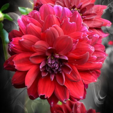 Lovely flower red in colour.