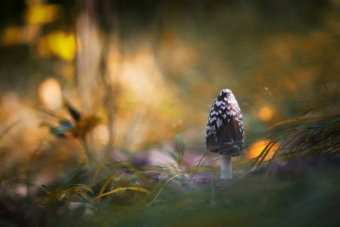 Mushroom 2 by MichalCandrak - Mushrooms Photo Contest