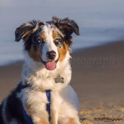 New Beach Friend