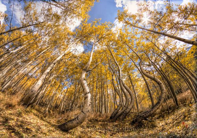 Fisheye by blairwacha - Tall Trees Photo Contest