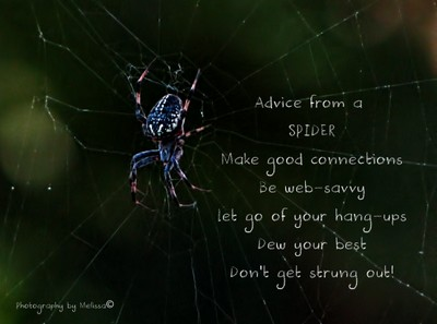 Advice from a Spider...
