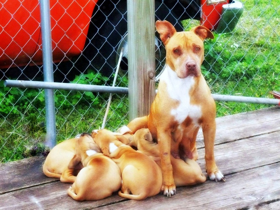 Pearl & her Pups