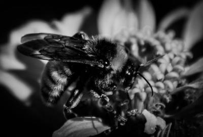 bee you mono