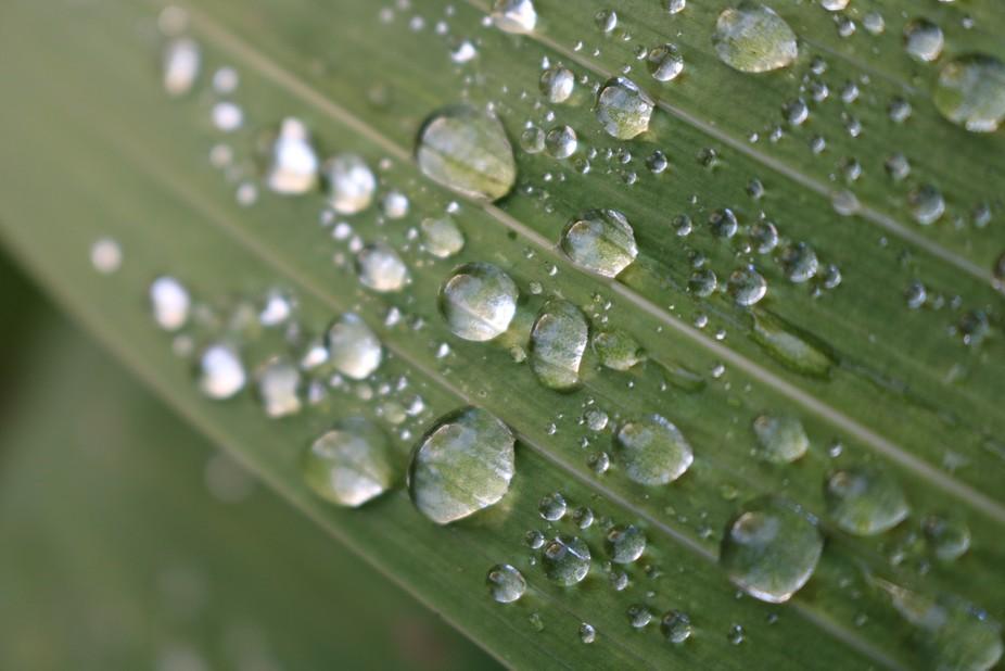 Waterdrops on leaf
