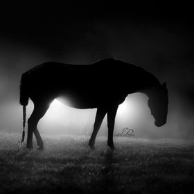I got home late one night and after driving through the fog all night I realized I needed to grab my horse out of the pasture and use her for a p...