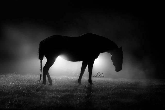 The Mist.  by Samantha_Dawn - Night Wonders Photo Contest