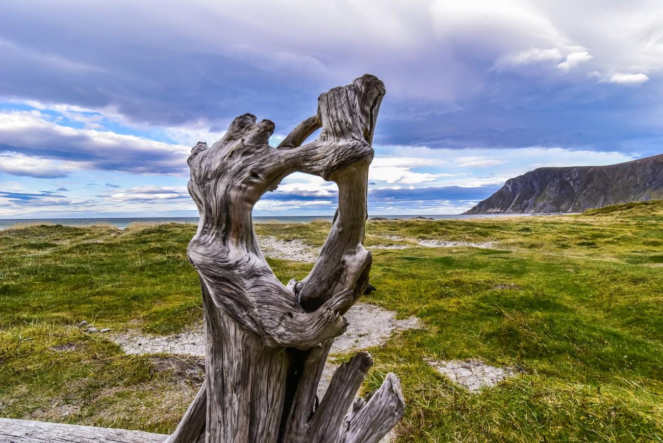 strange piece of wood on a beach near Rambers, Lofoten islands