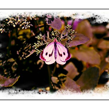 Manipulated photo of a Butterfly.