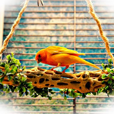 Bird on a swinging perch.