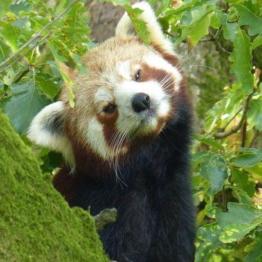 Taken at the Lake District Wildlife Park