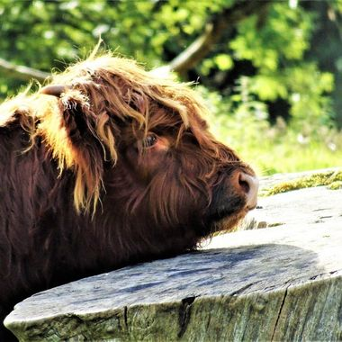 Love this thoughtful Young Heiland coo, although looking a bit sad :(
