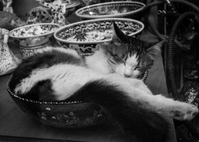 Cat in a Shopwindow