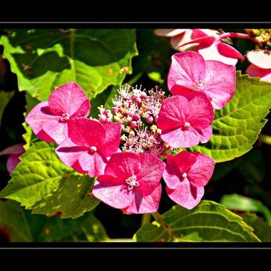 Flowers found  in our garden.