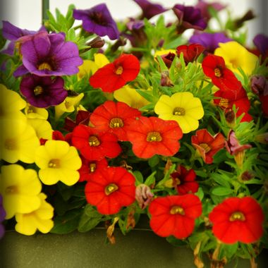 Colourful box of flowers.