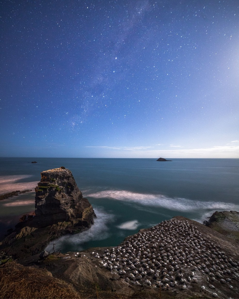 Sleeping gannets under the Milky Way on a moonlit night. It's safe to say that they have the best views in the house! by mrlesterchan - Social Exposure Photo Contest Vol 12