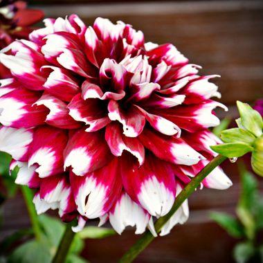Good healthy flower.