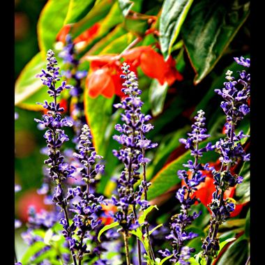 Different coloured flowers.