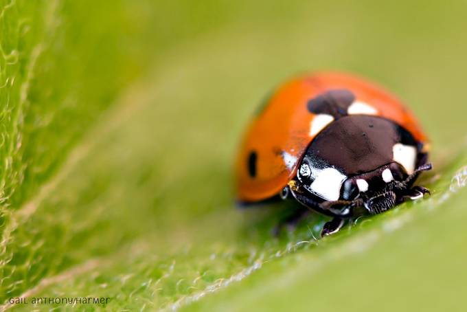 Beautiful Ladybird  by mihrt - Macro Games Photo Contest