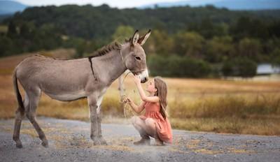 The sweet donkey