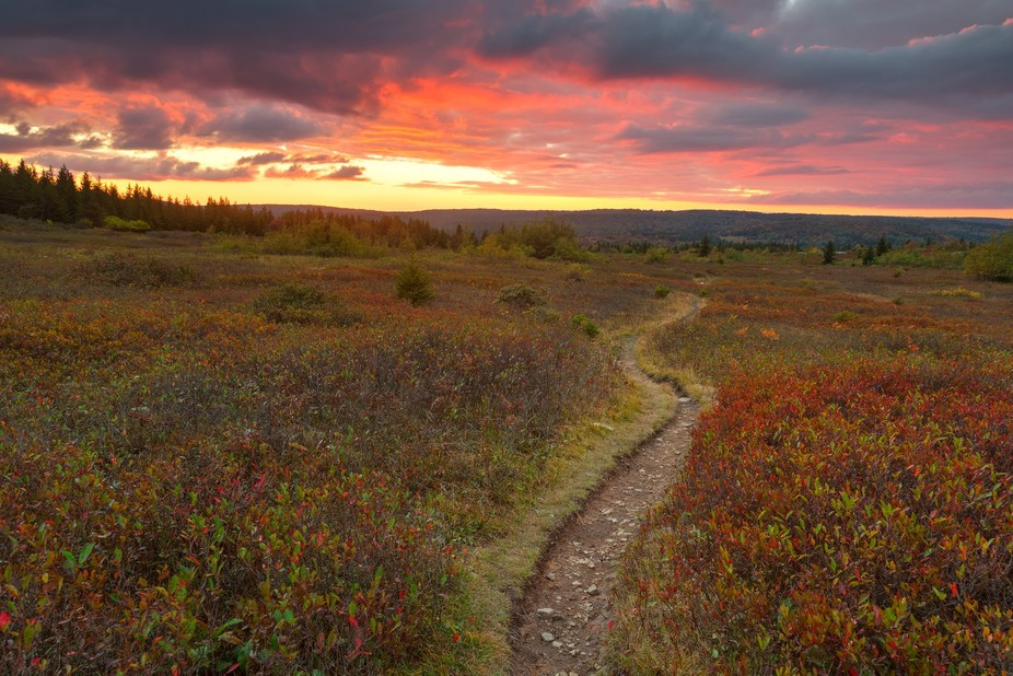 Cloudy twilight scene & winding trail from the Dolly Sods Wilderness near Davis, West Vir...