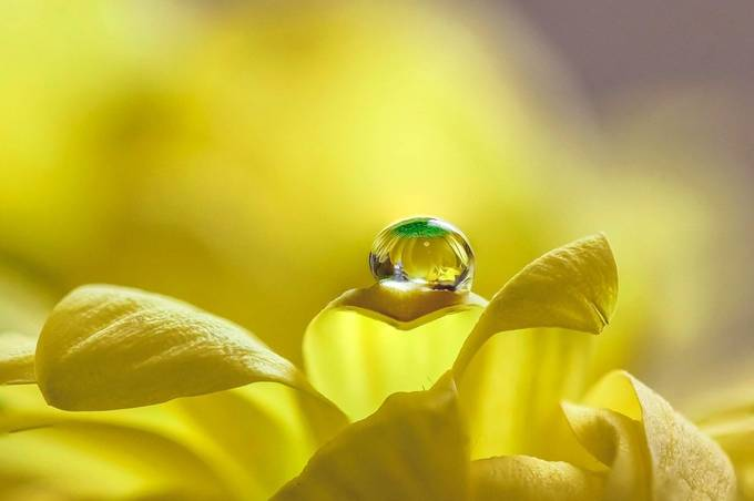 Just one drop by ksean - Macro Games Photo Contest