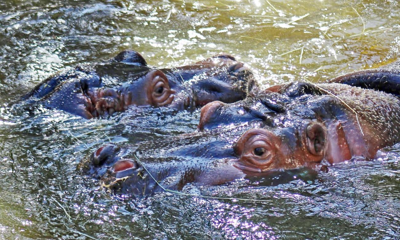 A Swim With Mom