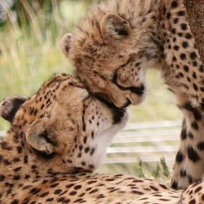 """""""A mother's love"""""""