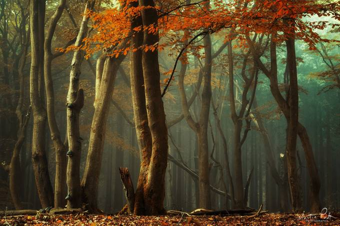 'Orange leaves just like a whole bunch of little hearts flying around the trees' - Yen T Do by martinpodt - Covers Photo Contest Vol 42