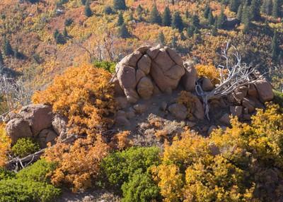 Autumn detail on the mountain