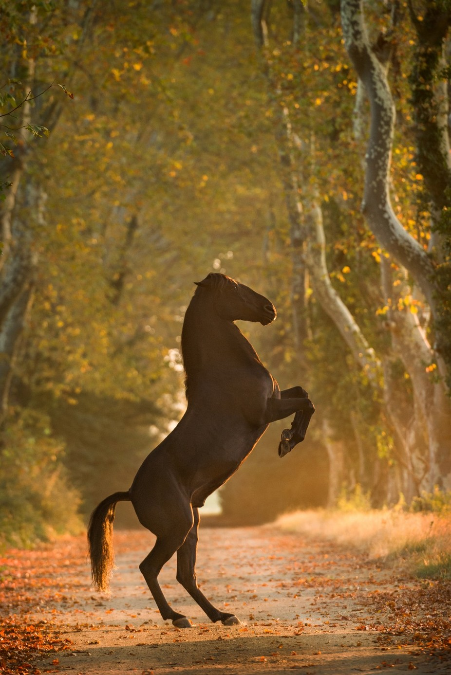 The prancing horse by Masher - Social Exposure Photo Contest Vol 12