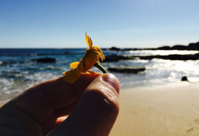 A yellow daisy flower lost on the beach