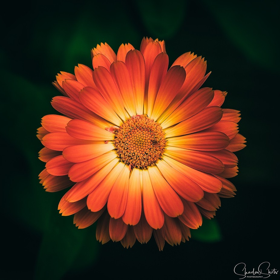 A Burst of Life by ShadowShots - Beautiful Flowers Photo Contest