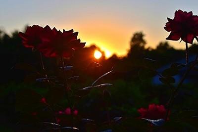 Flowers Last Light copy