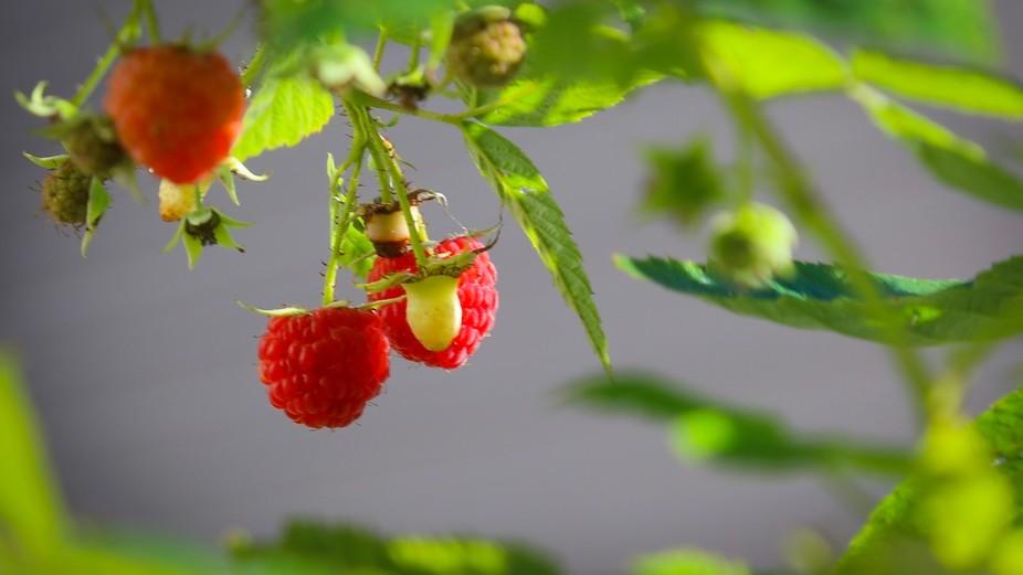 Raspberry #1