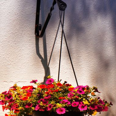 Hanging basket full of colourful flowers.