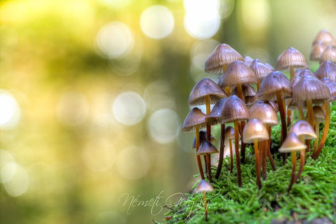 Family by gergelynemeti - Mushrooms Photo Contest