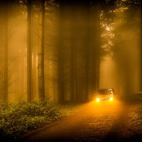 In a foggy morning in a forest, a car is passing on a small road