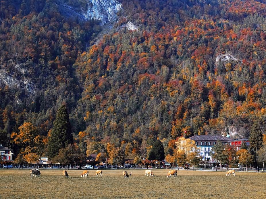 The animal farm in autumn paradise