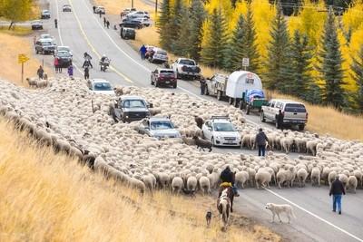 Idaho Traffic Jam Part II