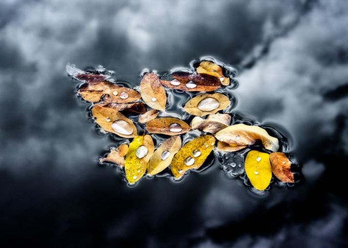 Fall Drops by smunited - Macro And Patterns Photo Contest