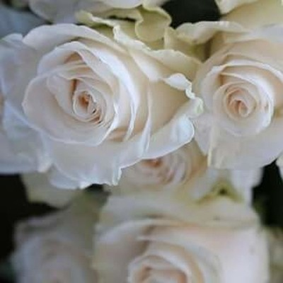 Reflection of White Roses