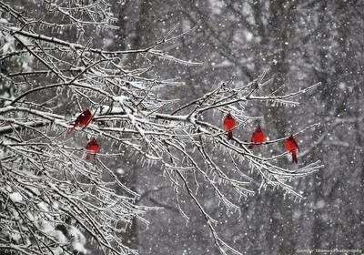 Natures decorations