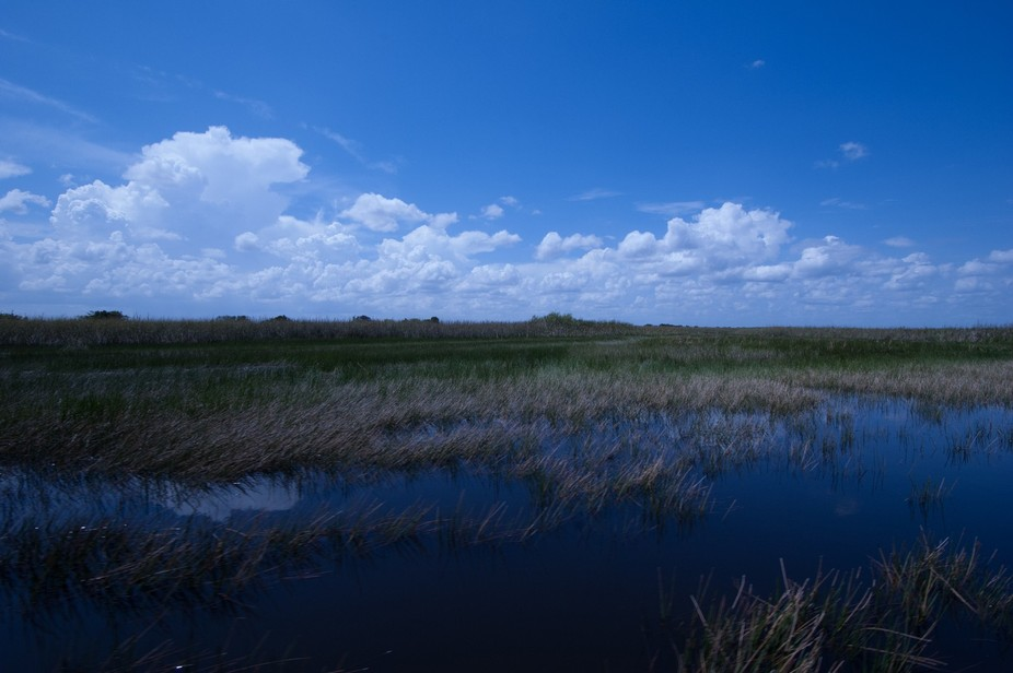 An airboat guided tour ride into the Everglades in search for gators.