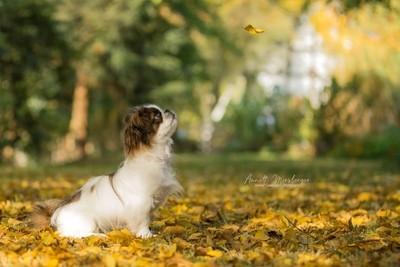 Her first Autumn...